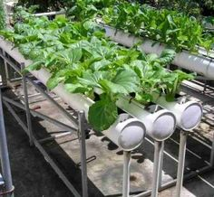 Homemade Hydroponic Systems
