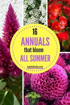 These 16 Annuals are perfect for adding blooms in your garden from June to frost! Most are low-maintenance and easy to care for once you know what they need to thrive! flower garden perennials 16 Annuals That Bloom ALL Summer Long - Natalie Linda Cut Flower Garden, Beautiful Flowers Garden, Flower Farm, Flower Beds, Beautiful Gardens, Flower Gardening, Flower Garden Plans, Gardening For Beginners, Gardening Tips