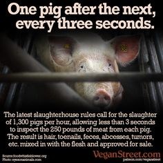 Each pig slaughterhouse is now encouraged to crank the line speed up to 21.7 pigs per minute, which is not only terrifying for the pigs, but also highly dangerous for anyone who eats the meat. There is a petition to slow this back down (we'd prefer one to stop it altogether, but we know we have work to do to get to that point). You can find the petition at foodwhistleblower.org/campaign/mssi/ veganstreet.com/dailymeme-7-3-17.html
