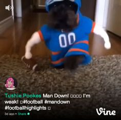 This will make you laugh! Dog in American Football outfit. :D #dogs #videos #pets