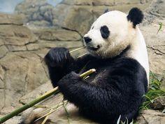 Mmm bamboo. Mmmmmmmm.