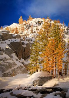 Western Larches at Inspiration Lake in Washington State's Enchantment Lakes Wilderness. US