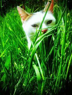 Odette on www.yummypets.com