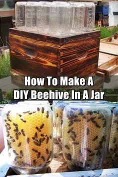 How To Make A DIY Beehive In A Jar - There are so many benefits to beekeeping: honey, beeswax and the knowledge that you are helping the bee population survive. The coolest thing about this DIY project is that you can see bees in action making the honeycomb. And after the honey has been made you turn the jars over, screw the cap on and you have a jar o' honey!