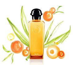 Eau de Mandarine Ambrée Hermes perfume - a new fragrance for women and men 2013 Perfume Reviews, Ambre, Beauty Shots, Body Lotions, Guy Pictures, Parfum Spray, Body Spray, Smell Good, Perfume Bottles