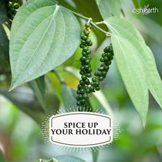 Visit a pepper plantation with the naturalist of Spice Village, Thekkady . Walk amidst rows of vines creeping on trellises and pluck a few ripe ones.  Bite into a peppercorn and experience its wild, hot flavours – CGH Earth dares you! Check out CGH Earth experiential resorts that connect you with nature, local community and heritage http://www.cghearth.com