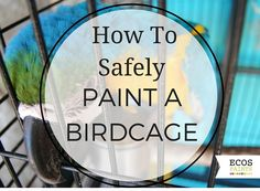 safely painting a bird cage