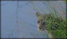 Beautiful Xongile looks so lonely #safarilive 4-3-17