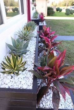 Incredible Flower Beds Ideas To Make Your Home Front Yard Awesome 190 After pulling out the dead bushes that sat in front of Tiffany's home, Monica built wood planters and filled them with Palm Springs plants, like cacti. Rustic Flower Beds With Rocks In Black Planters, Wood Planters, Planter Boxes, Front Yard Planters, Landscaping With Rocks, Front Yard Landscaping, Landscaping Ideas, Florida Landscaping, Modern Landscaping