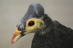 rare birds | Rare Birds Get Private Beach