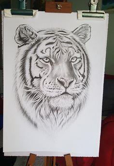 Lion Head Drawing, Cat Drawing, Tattoo Sketches, Drawing Sketches, Pencil Drawings, Tattoo Outline, Lion Tattoo, Leopard Tattoos, Tiger Tattoo Design