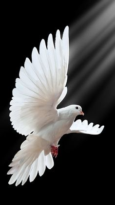 The bird of Peace.                                                                                                                                                                                 Mehr