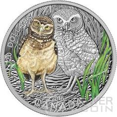 2015 Baby Burrowing Owl Commemorative Mintage, Photos, Specifications, and Where to Buy Mint Coins, Silver Coins, Burrowing Owl, Canadian Coins, Coin Art, Commemorative Coins, Rare Coins, Coin Collecting, Baby Animals