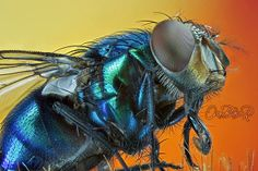 Compound Eye Readers' Best Science and Nature Photographs of 2013