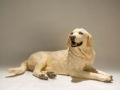 Labrador Dog Sculpture