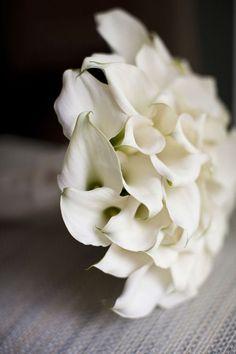 i love calla lilies