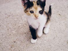 ❃ Tiny Kitty Steps #Pinterest #CivilEngineer