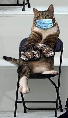 Crazy Cat Lady, Crazy Cats, Cute Cats, Funny Cats, Bernie Memes, Cat Quotes, Bernie Sanders, Cat Love, Beautiful Creatures