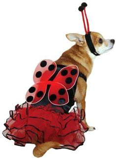 Casual Canine Lucky Bug Dog Costume Small -- More info could be found at the image url.