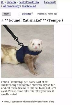 Found: Cat Snake || I'm literally crying I'm laughing so hard.
