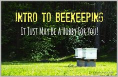 Want to learn how to keep bees? There are several things to consider before jumping into beekeeping, so let's take a look and see if it's a hobby for you!