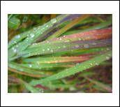 image 6386 @openphoto.net.net