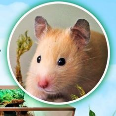 Hamster Explores Her Rainforest Cage For The First Time