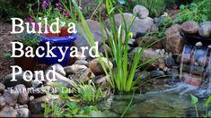 How to Make Sugar Water for Hummingbirds | Empress of Dirt Backyard Garden Landscape, Small Backyard Gardens, Ponds Backyard, Garden Landscaping, Landscaping Ideas, Tropical Backyard, Modern Backyard, Backyard Pergola, Garden Junk