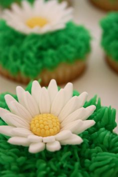 Daisies on a green background...  love it!!