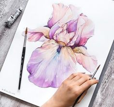 Flowers Drawing Iris New Ideas Watercolor And Ink, Watercolour Painting, Watercolor Flowers, Watercolors, Watercolour Illustration, Pink Drawing, Drawing Flowers, Iris Painting, Guache