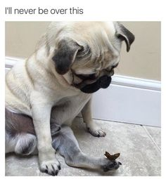 This dog who was captured in such a pure, innocent moment: | 21 Dog Memes That Will Cure Your Bad Day