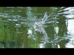 BONCEL || PERGI KE SEKOLAH MALAH MANCING - YouTube Fishing Videos