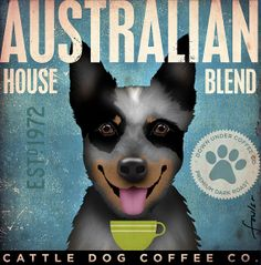 Australian Cattle Dog blue heeler Coffee Company original graphic illustration  on canvas 12 x 12 by stephen fowler via Etsy