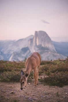 Best time of year to do camping in Yosemite National Park California. Where to stay and when to see wildlife and waterfalls for photography. Great hiking and the perfect place for a family road trip adventure vacation in an RV or DIY campervan conversion. Camping Yosemite, Go Camping, Camping Menu, Camping Recipes, Family Camping, Camping Hacks, California National Parks, Yosemite National Park, Nationalparks Usa