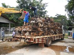 An intercepted cargo of dogs destined for the dog meat trade is unloaded at a rescue centr...