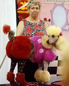 45 Best Dogs Images Poodle Grooming Creative Grooming Funny Dogs