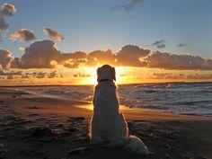 Golden Retriever enjoys a beautiful sunset I Love Dogs, Cute Dogs, Beach Walk, Sunset Beach, Dog Beach, Beach Sunsets, Sunset Sky, Sunset Photography, Dog Photography