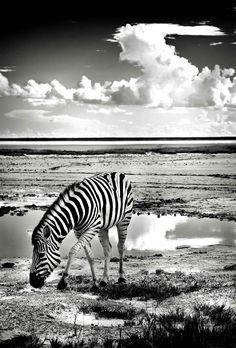 La vie sauvage en noir et blanc