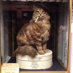 A stuffed cat in St James.