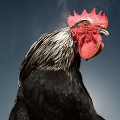 Animal Expressions – Animal Photography by David Boni