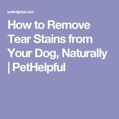 How to Remove Tear Stains from Your Dog, Naturally | PetHelpful