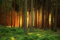 50 Fotos Bosques Mágicos de todo el mundo - Taringa!