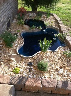 Contemporary above ground koi pond & water garden with bog waterfall on contemporary fireplace waterfall, contemporary hotel waterfall, contemporary backyard oasis, contemporary indoor waterfall, contemporary backyard desert,