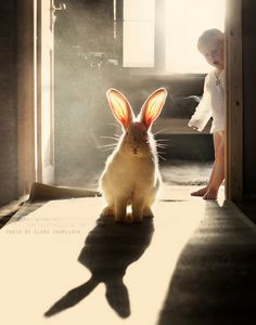 Bunny Love the lighting so much! Animals And Pets, Baby Animals, Funny Animals, Cute Animals, Funny Pets, Funny Bunnies, Beautiful Creatures, Animals Beautiful, Tier Fotos
