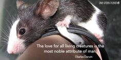 The love for all living creatures is the most noble attribute of man..... Charles Darwin