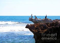A sunny morning in Western Australia bird overlook the Indian Ocean. The photograph was taken by Tracey Everington. Landscape Artwork, Colorful Artwork, Framed Prints, Canvas Prints, Fractals, Art Designs, Fine Art America, Wildlife, Rest