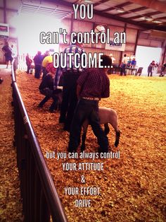Control your attitude and drive. Fair Quotes, Cow Quotes, Horse Quotes, Animal Quotes, Livestock Judging, Livestock Farming, Showing Livestock, Show Goats, 4 H Club