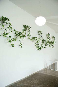 Vertical Gardens Australia