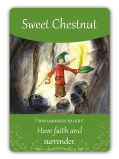 Sweet Chestnut - Bach Flower Oracle Card by Susanne Winberg. Message: Have faith and surrender.
