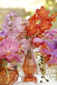 Orquídeas vanda em vasos de Murano by Tania Bulhões, com cores vibrantes como rosa e laranja!